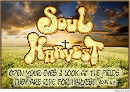 1 soul harvest